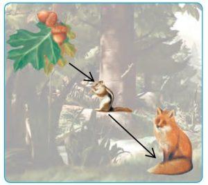 جواب صفحه 84 درس دوازدهم علوم تجربی پایه ششم ابتدایی - جنگل برای کیست ؟ کلاس اینترنتی ما - مومکا - momeka.ir