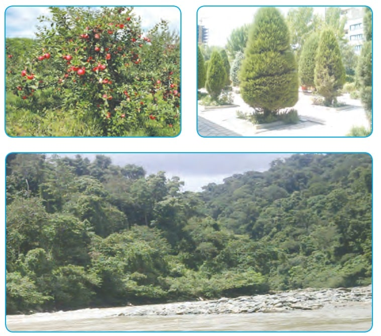 جواب صفحه 90 درس دوازدهم علوم تجربی پایه ششم ابتدایی - جنگل برای کیست ؟ کلاس اینترنتی ما - مومکا - momeka.ir