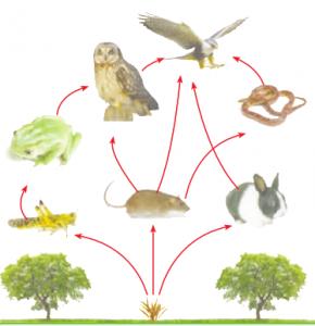زنجیره غذایی علوم تجربی چهارم - کلاس اینترنتی ما - مومکا - momeka.ir